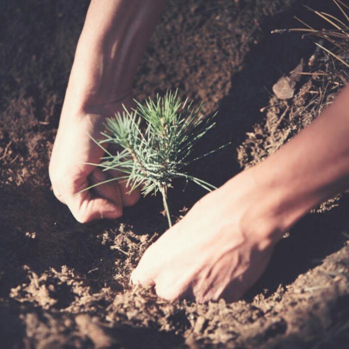 ekohunters-one-tree-planted