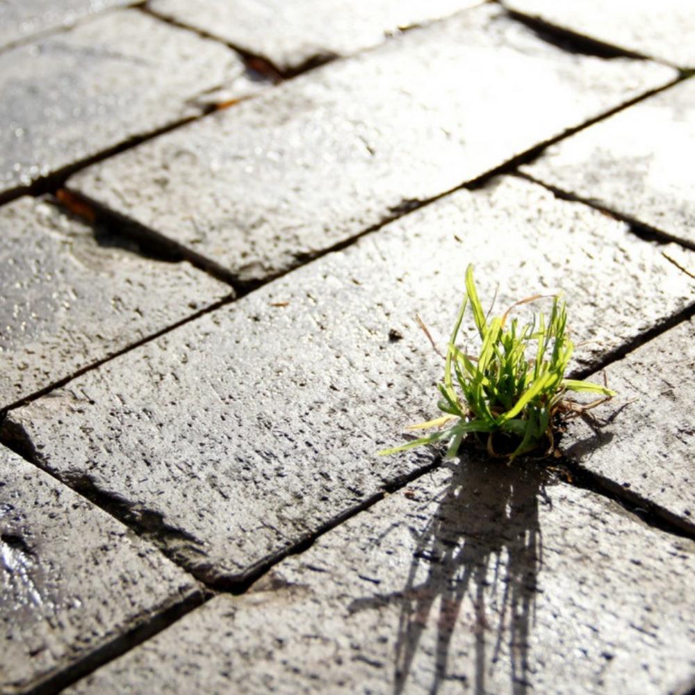 ekohunters-arquitectura-sostenible-sustainable-architecture