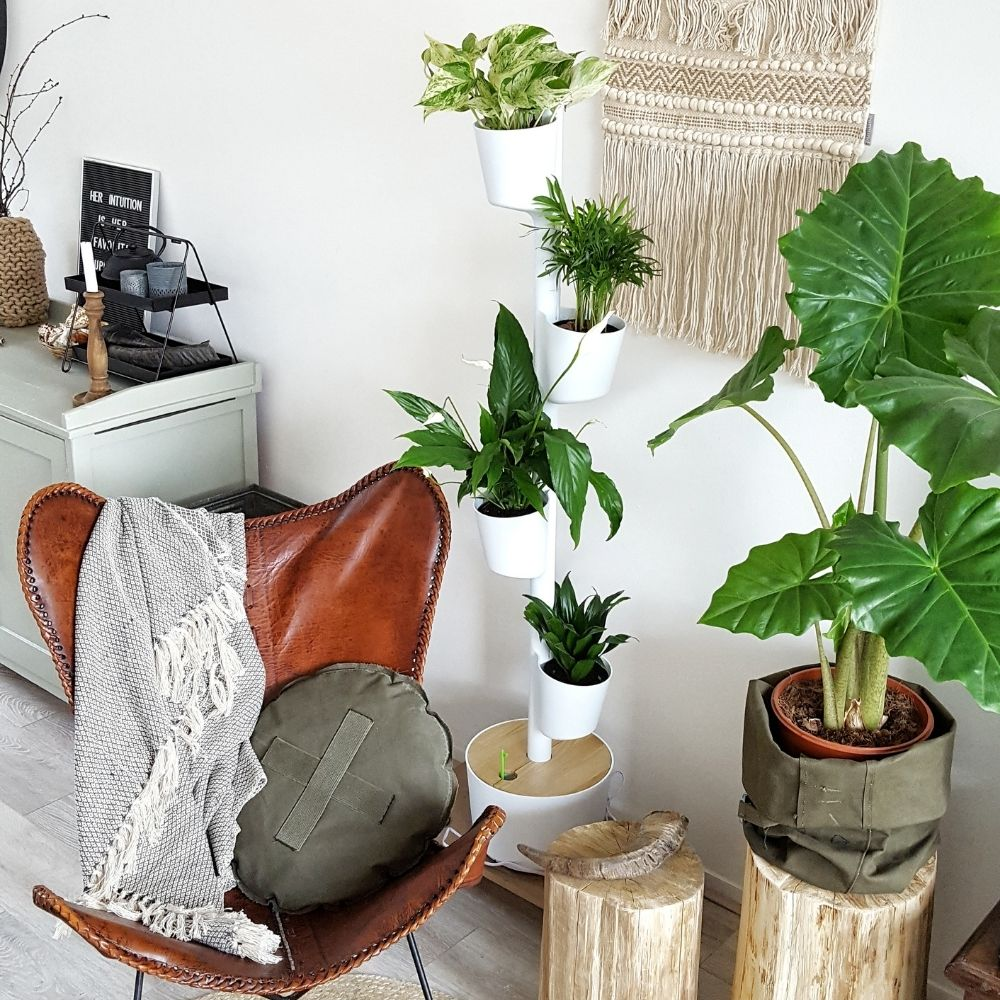 Sustainable pots and indoor plants for your home